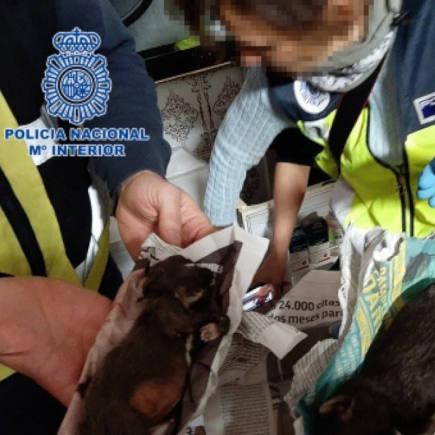 Aevet denunciará a los veterinarios que realicen prácticas ilegales